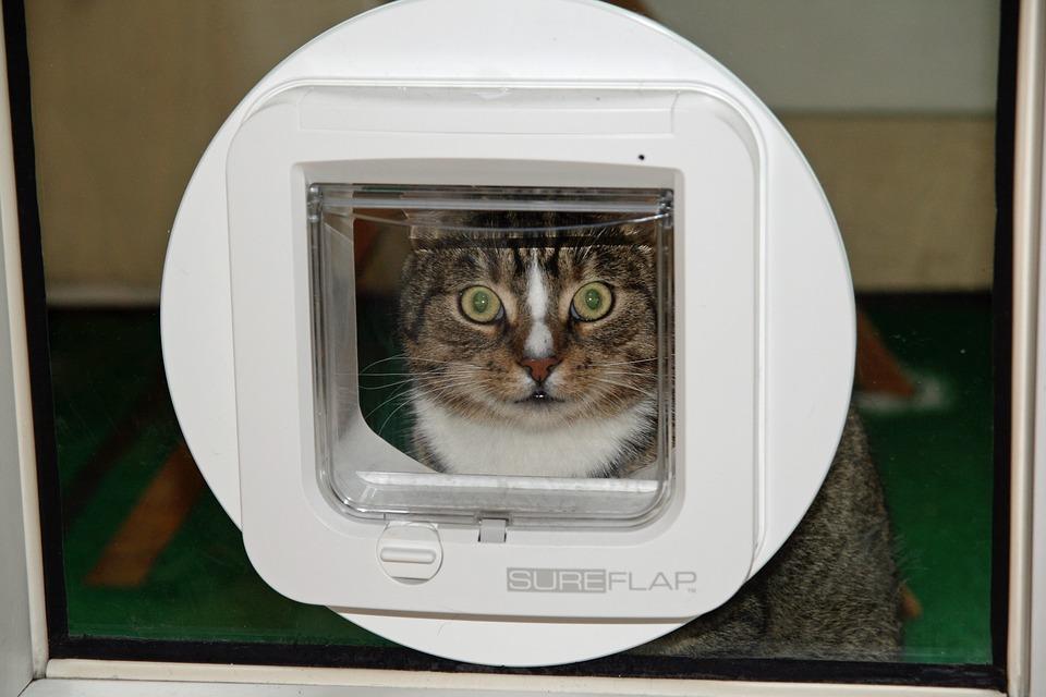 Forkæl din kat med en dør til den store verden